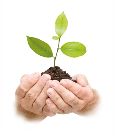 Tree sprout in hands Stock Photo - 8663242