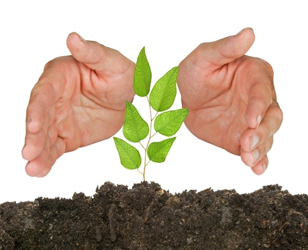 ecological problem: Tree seedling protected by hands Stock Photo