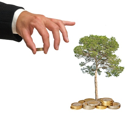 Tree growing from coins Stock Photo - 8954159