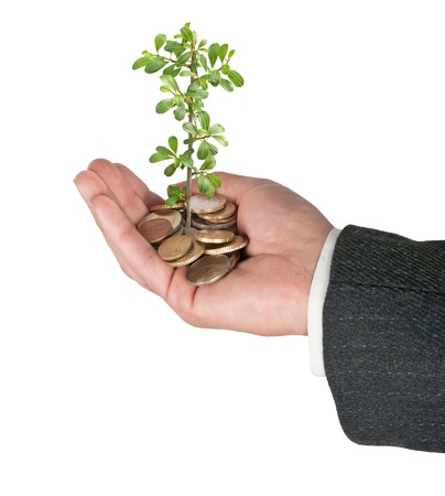 growing money: Palm with a tree growng from pile of coins