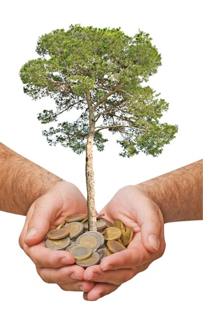 Palms with a tree growng from pile of coins photo