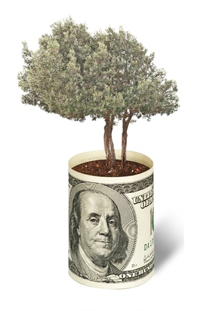 pot of money: olive tree  growing from dollar bill