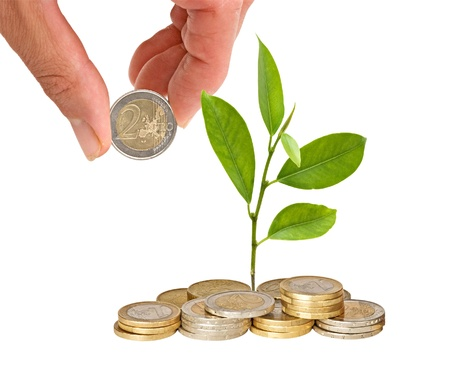 Citrus sapling growing from coins photo
