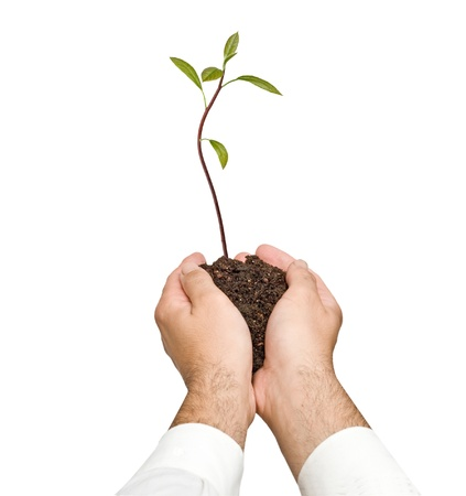 avocado  sapling in hands as a gift of agriculture photo