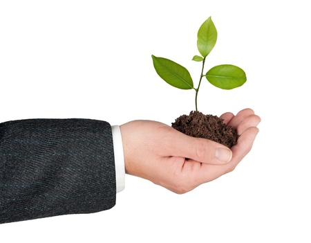 sapling in hand Stock Photo - 9031270