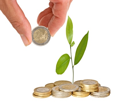 Citrus sapling growing from coins Stock Photo - 9213226