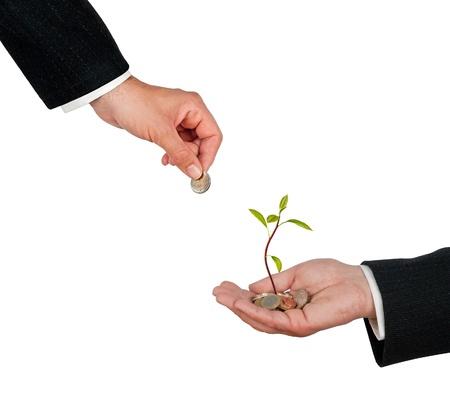 ecomomical: Investment to avocado farming