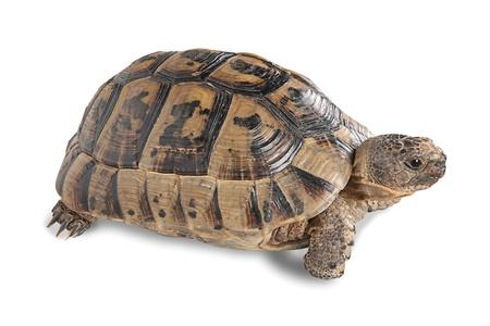 tortuga: Cerca de tortuga Foto de archivo