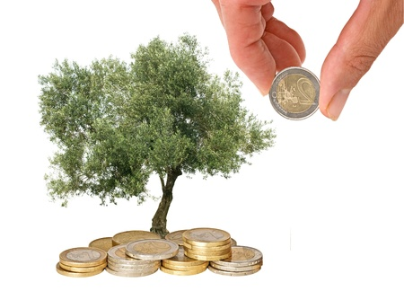 Olive tree growing from pile of coins      photo