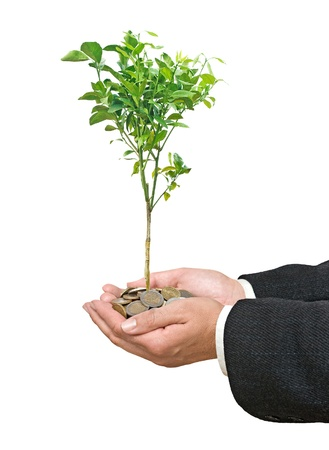 ecomomical: Citrus tree in hands Stock Photo