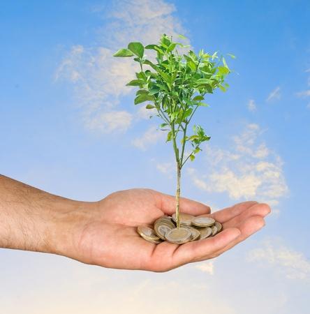 ecomomical: Citrus tree in hand Stock Photo