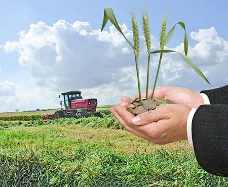 Gift of wheat photo