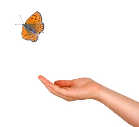 Butterfly flying from hand Stock Photo - 9728575