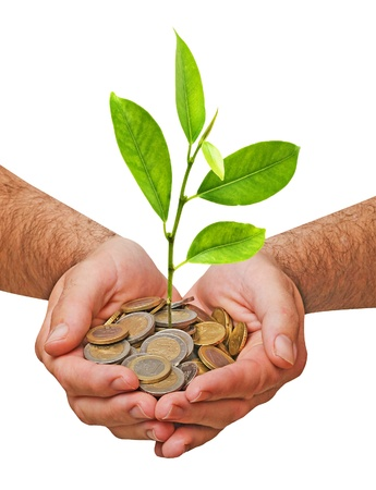 Citrus sapling growing from pile of coins Stock Photo - 9852698