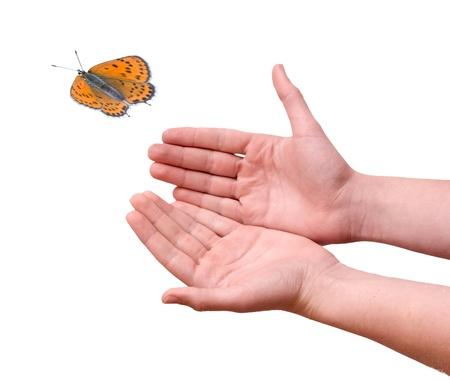 arthropoda: Butterfly flying from hands