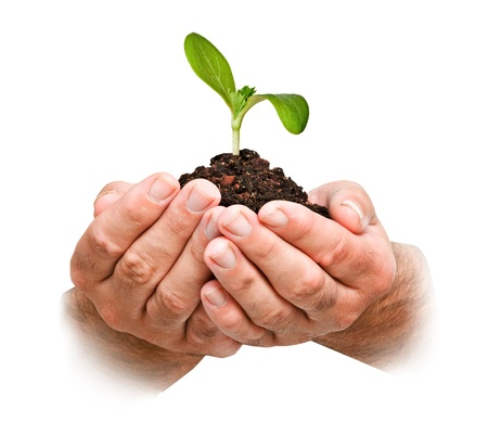 carbon footprint: plant in hands Stock Photo