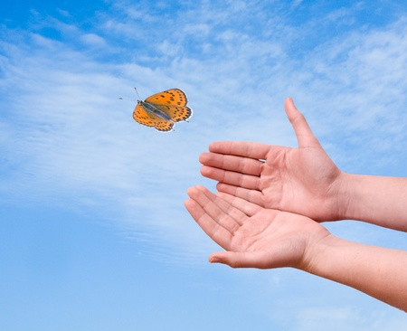Butterfly flying from hand Stock Photo - 10419922