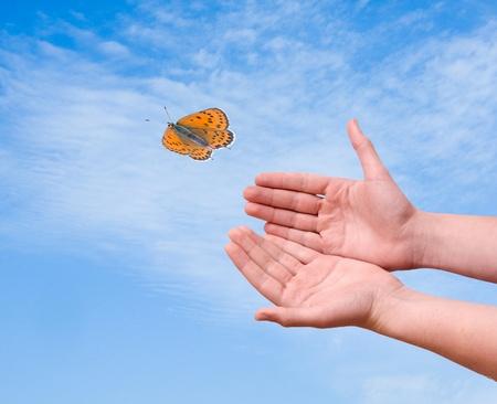 arthropoda: Butterfly flying from hand