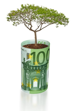 pot of money: Tree growing from euro bill