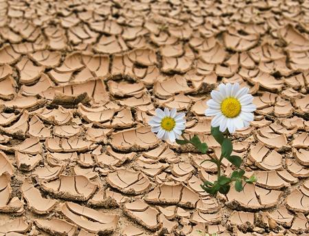 barren land: Barren land at summer
