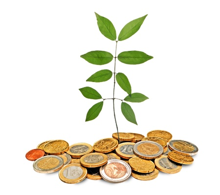 sapling growing from pile of coins Stock Photo - 10538052