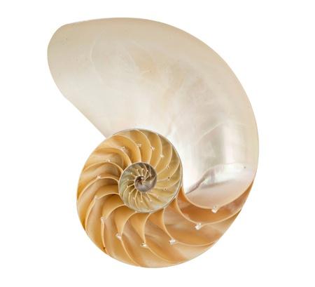 nautilus shell: nautilus shell