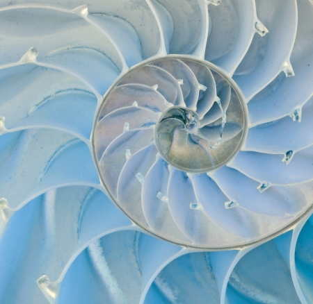 Section of nautilus shell Stock Photo - 10567776