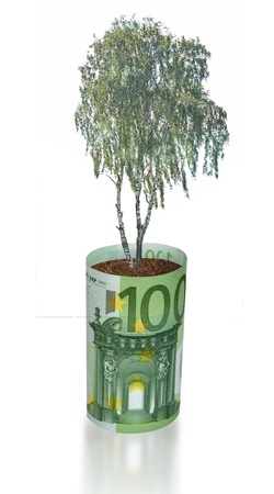 ecosavy: Birch tree growing from euro bill