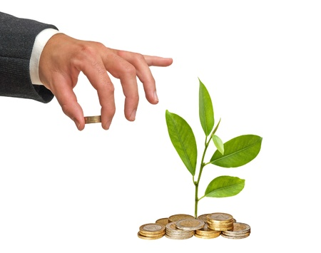 money in hand: Citrus sapling  growing from pile of coins Stock Photo