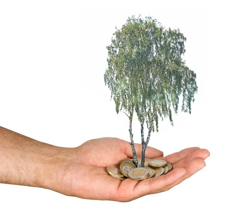 Palm with a tree growng from pile of coins Stock Photo - 10735382