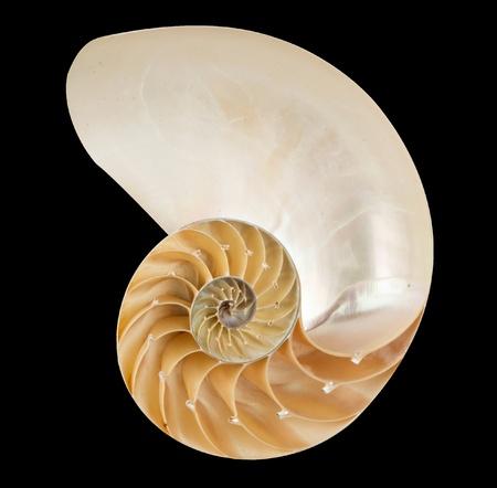 mollusca: Nautilus shell