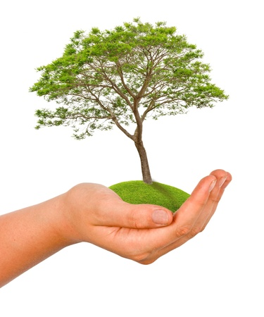 ecosavy: tree in hand