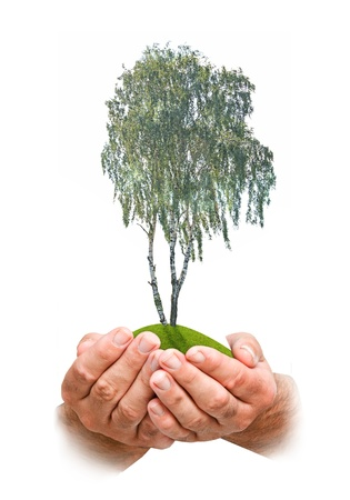Tree in hands Stock Photo - 10832525