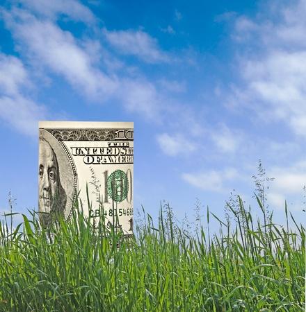 origen animal: Dólar crecimiento de la hierba Foto de archivo