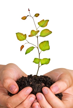 sapling in hands Stock Photo - 10832565