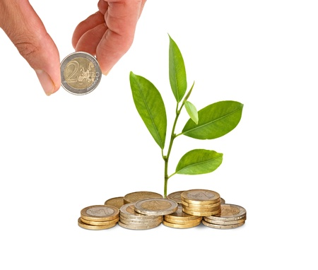 Citrus sapling  growing from pile of coins photo