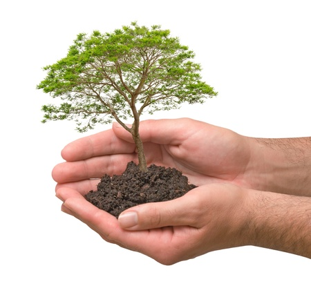 tree planting: Tree in hands