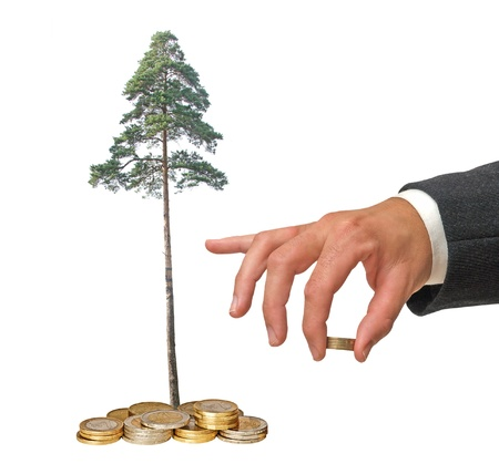 Pine tree growing from coins photo