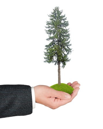 ecosavy: Fir tree in hand
