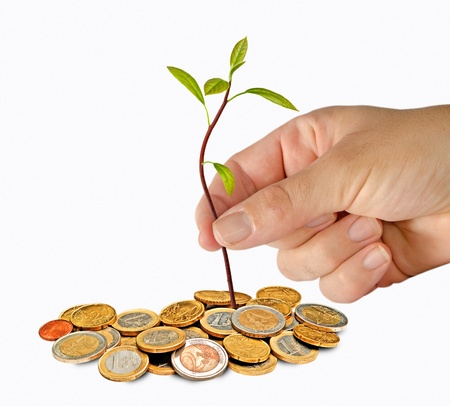 Planting avocado seedling to pile of coins Stock Photo - 11150723