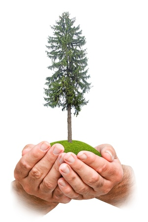 ecosavy: Fir tree in hands Stock Photo