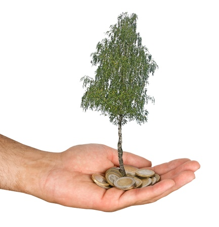 Palm with a tree growing from pile of coins photo