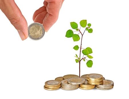 sapling growing from coins Stock Photo - 11404560