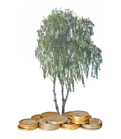 Tree growing from coins photo