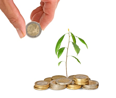 Avocado sapling growing from coins photo