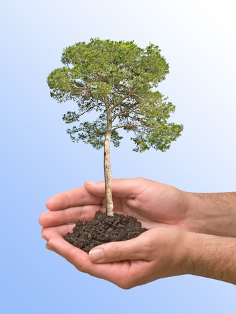 ecosavy: Pine tree in hands