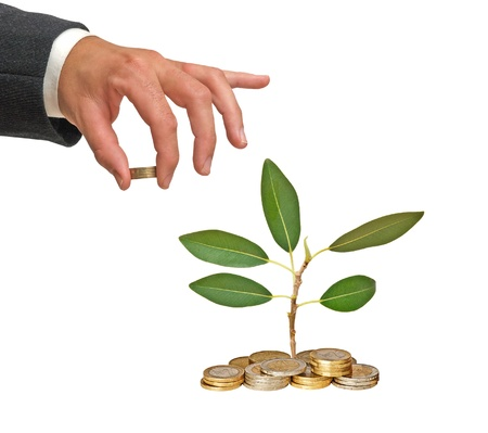 sapling growing from coins Stock Photo - 11688035