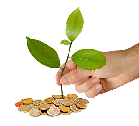 man planting citrus sapling Stock Photo - 11688064