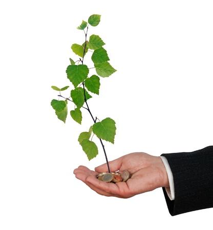 sapling in hand photo
