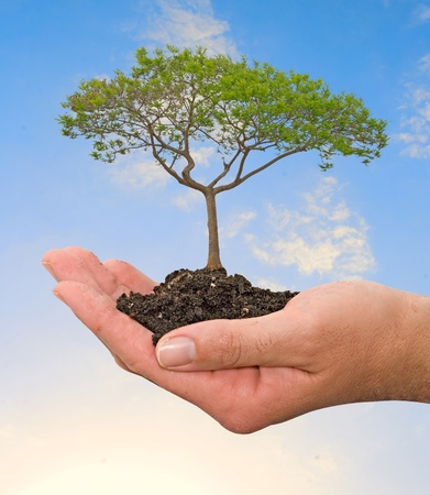 carbon footprint: tree in hand